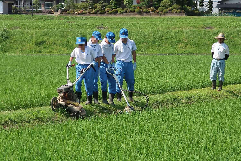 農作業4.jpg
